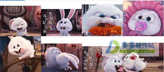 爱宠大兔子机密表情表情包萌哒萌小可爱图片